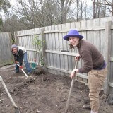 Setting up garden beds for fruit trees