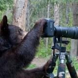 bear-nature-photographer