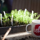 seedlings_hello (1 of 1)
