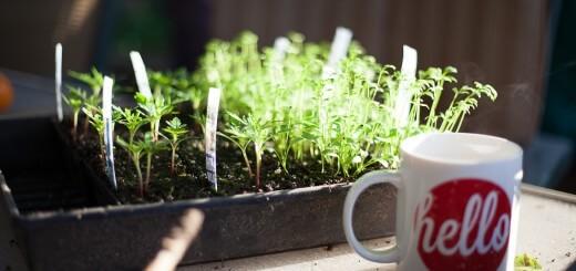 seedlings_hello (1 of 1)