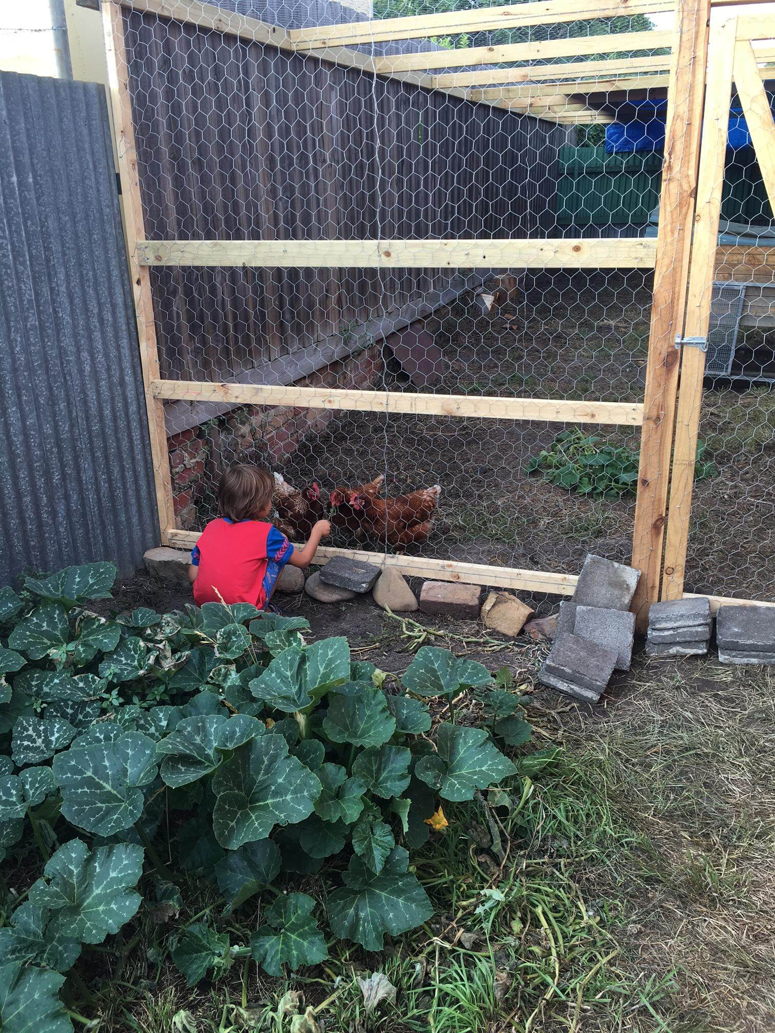chooks find a happy home permablitz melbourne