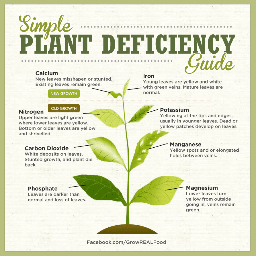 Identifying plant nutrient deficiencies permablitz melbourne for Soil zinc deficiency