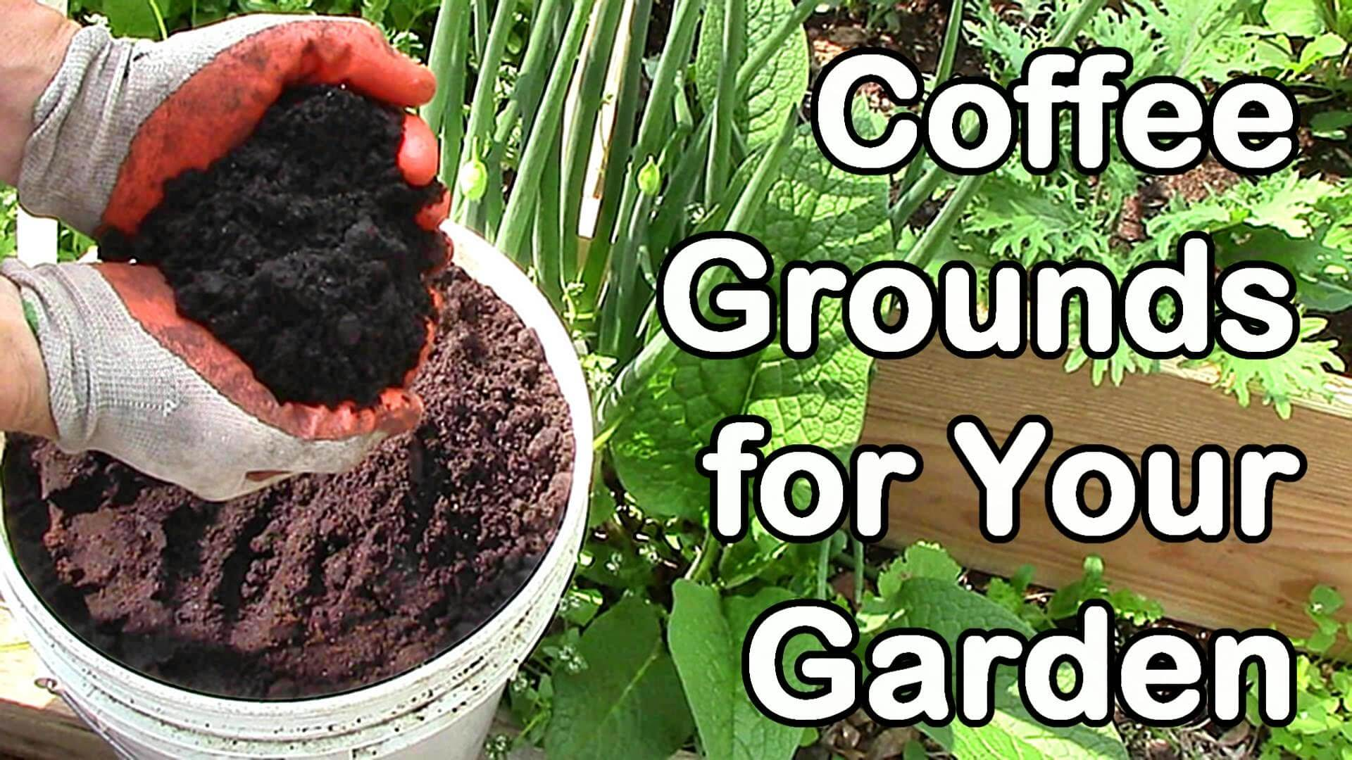 Free coffee grounds permablitz melbourne for How to use coffee grounds in garden