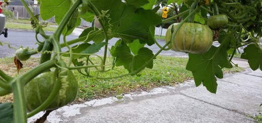 pumpkins_over_foodpath