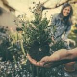 planting-865294_960_720