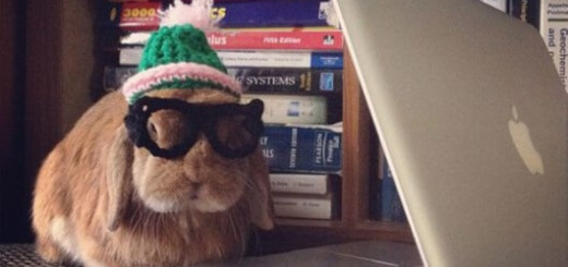 Hipster bunnies have an unfair advantage as they can type much faster than we mere mortals