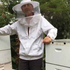 backyward-beehive