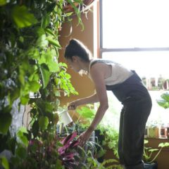 meet-a-woman-who-keeps-500-plants-in-her-brooklyn-apartment-modern-farmer