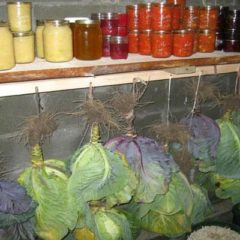 here-is-how-you-can-store-vegetables-for-months-without-a-refrigerator