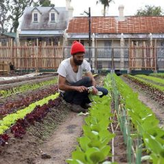 sydney-now-has-its-very-own-working-city-farm