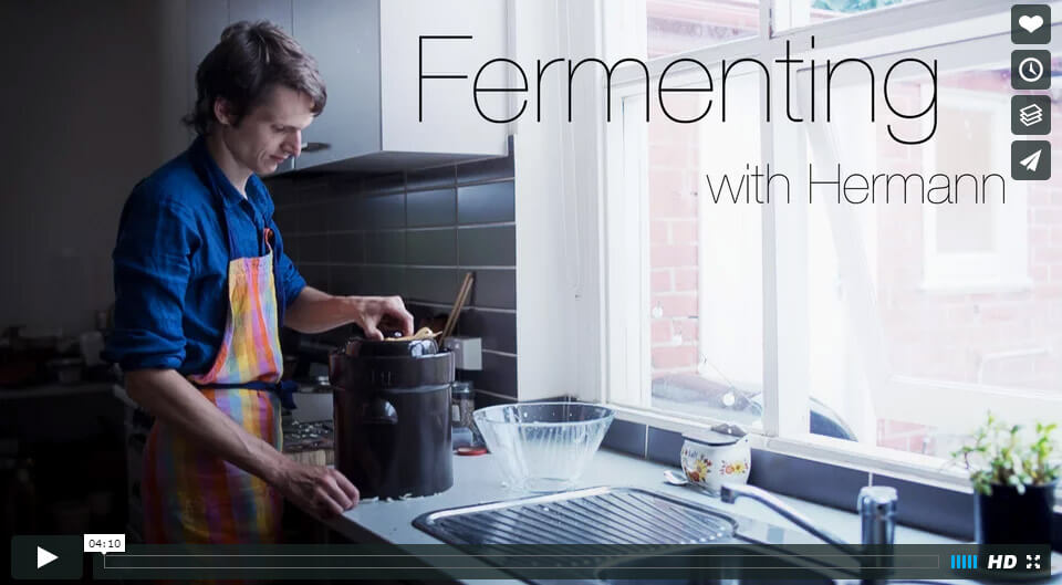 Fermenting with Hermann