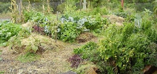 5-simple-ideas-for-transitioning-into-a-permaculture-garden-the-permaculture-research-institute