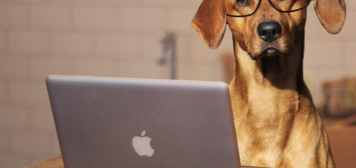 dog-using-laptop-computer