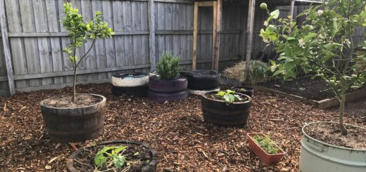 Companion Planting Chart Permablitz Melbourne