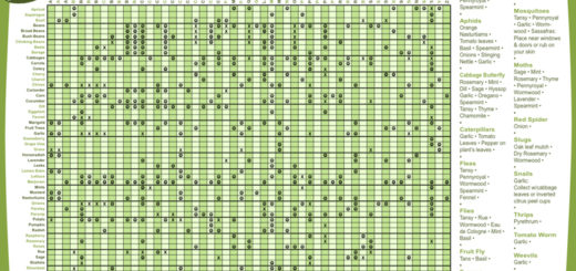 companion-planting-chart-IDEP[1]