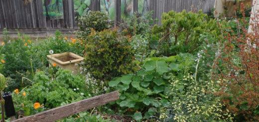 What an amazing garden!