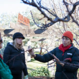 Karen Sutherland will lead a workshop demonstrating how to prune fruit trees